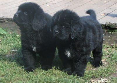 puppy-img-3