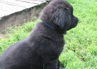 Black-puppy-img-1.2