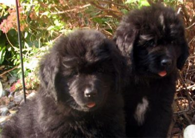 Connies_Puppies-img-1.2
